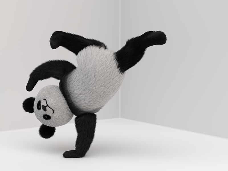 Panda macht Handstand